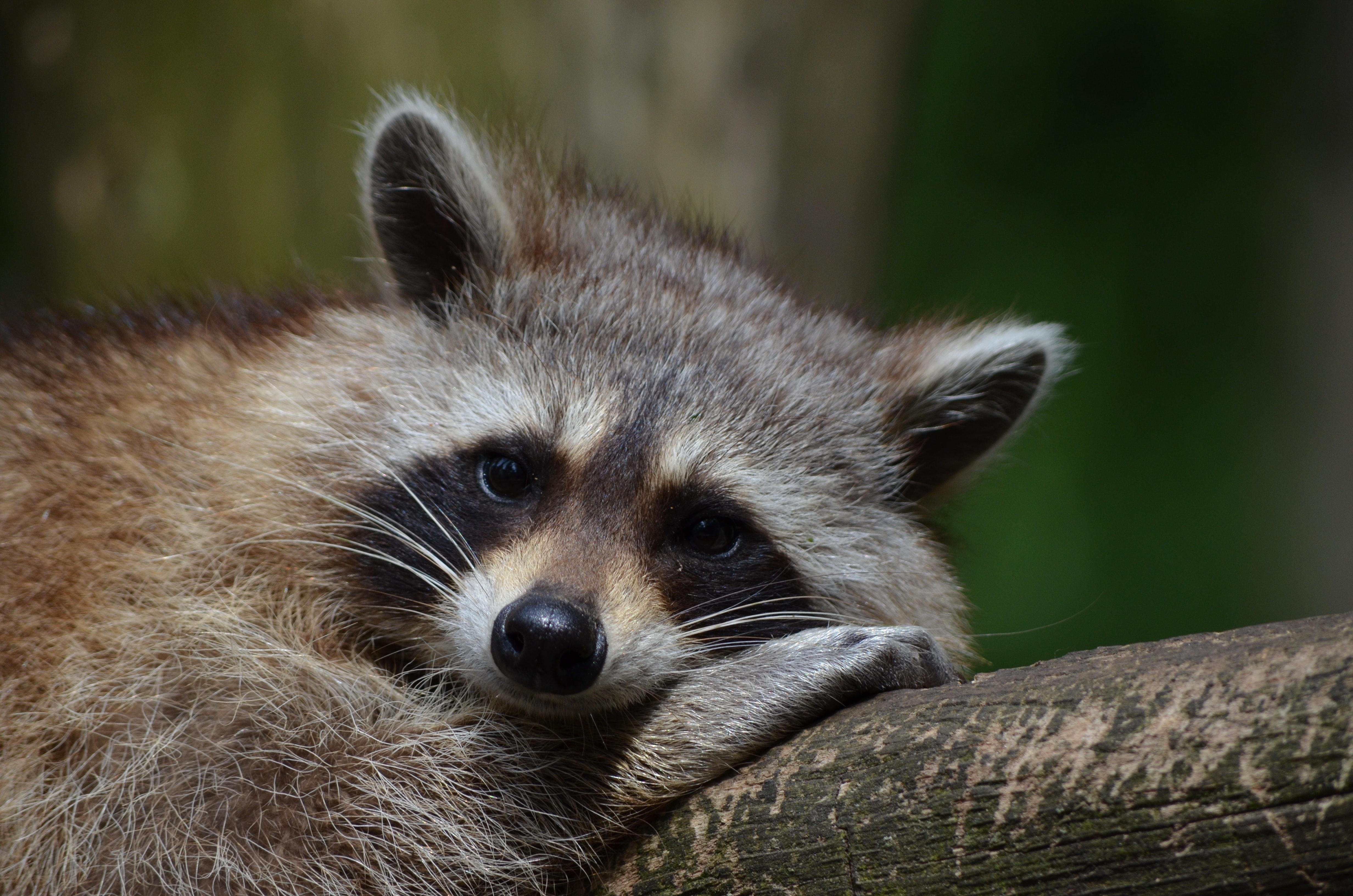 animal-animal-photography-close-up-54602